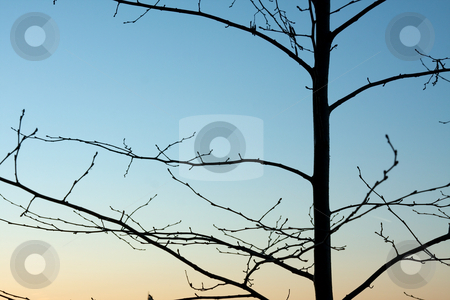 Branches stock photo, Bare tree branches against dusk sky by P?