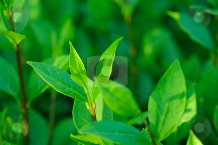 Plant stock photo, Closeup of fresh green plants by P?