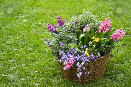 Basket with spring flowers in the garden stock photo mightylinksfo