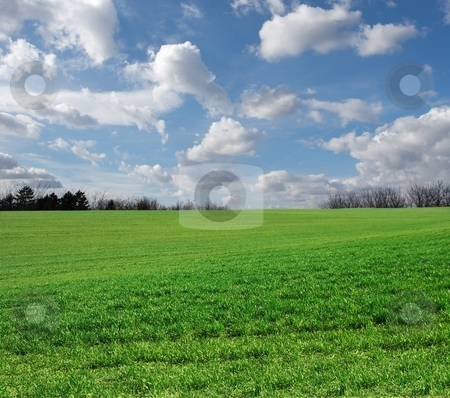 Field stock photo, Green field against blue sky by P?