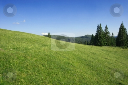 Field stock photo, Green field and pine forests in the carpathians by P?
