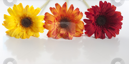 Artificial flowers lined up stock photo, Red, orange, yellow artificial flowers lined up by Stephen Clarke