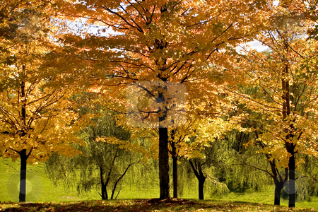 Bright Autumn stock photo, Trees and leaves in bright colors of Fall by Chandra Ramsurrun