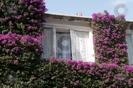 Window with Flowers stock photo, An window surrounded by greenery and pink flowers by Kevin Tietz