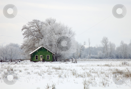 In a Sea of White stock photo, A cold winter morning with a heavy forst and new snow leaves an old shack standing out as splash of color on a monotone day. by Mike Dawson