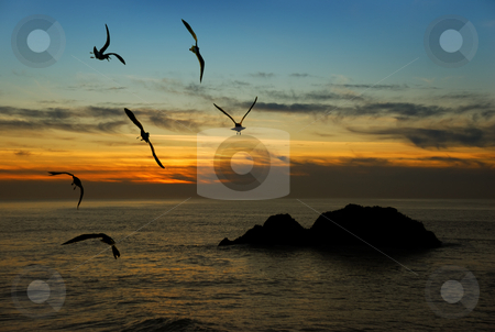 Twilight in California stock photo, Seagulls flying over the Pacific coast in California in twilight. by Ivan Paunovic