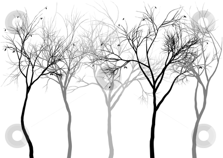 Foggy forest, vector stock vector clipart, Group of detailed tree silhouettes, vector by Beata Kraus