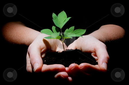 Young plant with soil in hands stock photo, Young plant in hands showing concept of environment and growth by Gunnar Pippel