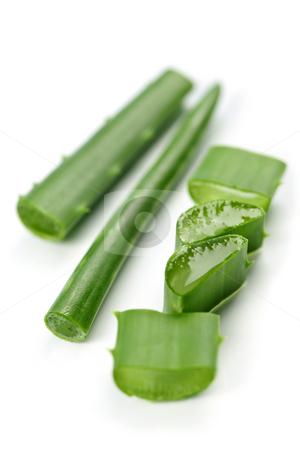 Aloe vera plant pieces stock photo, Closeup of aloe vera plant pieces isolated on white background by Elena Elisseeva