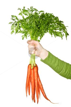 Hand holding carrots stock photo, Woman's hand holding bunch of whole fresh organic orange carrots by Elena Elisseeva