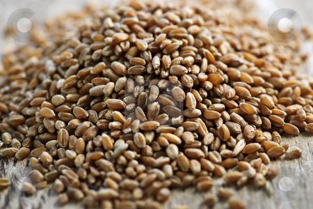Whole grain wheat kernels closeup stock photo, Closeup on pile of organic whole grain wheat kernels by Elena Elisseeva