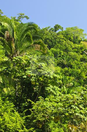 Tropical jungle background stock photo, Background of lush tropical jungle at Pacific coast of Mexico by Elena Elisseeva