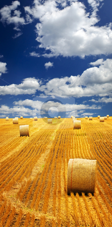 Farm field with hay bales stock photo, Agricultural landscape of hay bales in a golden field by Elena Elisseeva