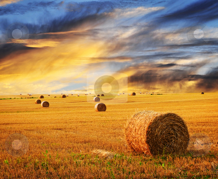 Golden sunset over farm field stock photo, Golden sunset over farm field with hay bales by Elena Elisseeva