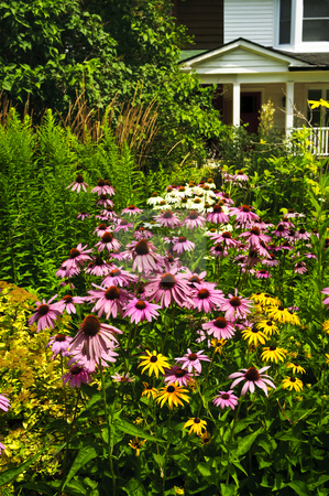 Residential garden landscaping stock photo, Residential landscaped garden with purple echinacea coneflowers and plants by Elena Elisseeva