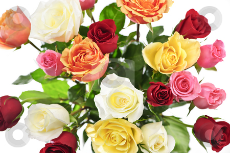 Bouquet of roses from above stock photo, Bouquet of assorted multicolored roses from above on white background by Elena Elisseeva
