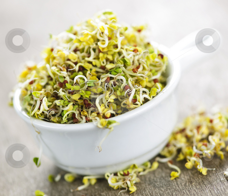 Alfalfa sprouts in a cup stock photo, Organic young alfalfa sprouts in a cup by Elena Elisseeva