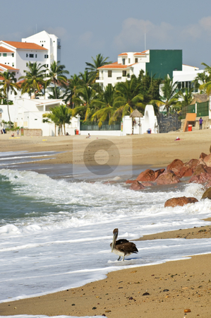 Pelican on beach in Mexico stock photo, Pelican on Puerto Vallarta beach in Mexico by Elena Elisseeva