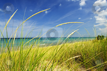 Sand dunes at beach stock photo, Grass on sand dunes at beach. Pinery provincial park, Ontario Canada by Elena Elisseeva