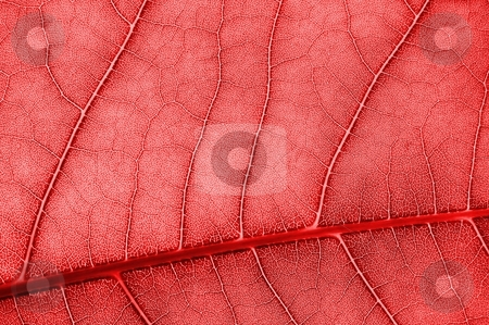 Colorful background stock photo, Abstract background with colored leave texture and copyspace by Gunnar Pippel
