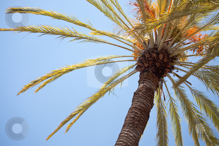 Palm Tree Against the Blue Sky stock photo, Palm Tree Abstract Against the Blue Sky. by Andy Dean