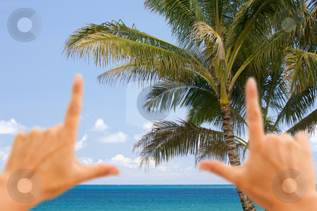 Hands Framing Palm Trees and Tropical Waters stock photo, Hands Framing Palm Trees and Inviting Tropical Waters. by Andy Dean