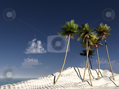 Wild Palms stock photo, A palm tree island with a sky background. by Chris Harvey