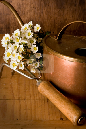 Gardening tools stock photo, Vintage gardening tool, watering can and white flowers by Anneke