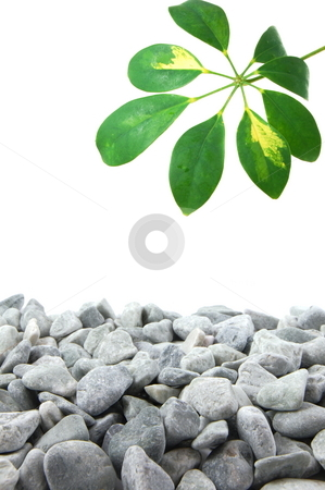 Stones and leaf stock photo, Stones and leaves with copy space for text message by Gunnar Pippel