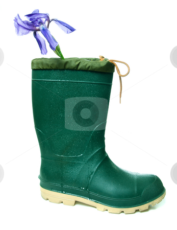 Still Art stock photo, A single rubber boot with an iris flower in it, isolated against a white background. by Richard Nelson