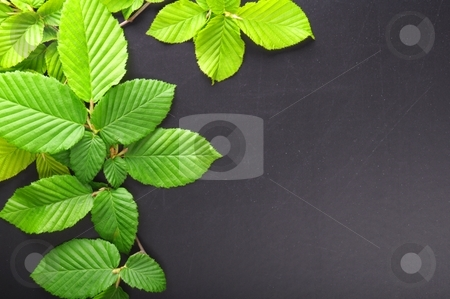 Leaves and copyspace stock photo, Green summer leaves and black copyspace for text message by Gunnar Pippel