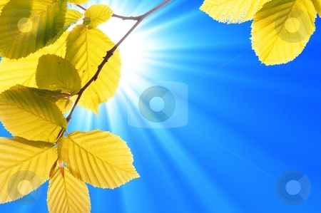 Green leaves stock photo, Summer or nature concept with green leaf and sky by Gunnar Pippel