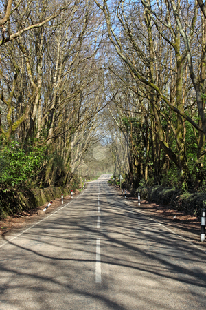 Road through a forest in Cornwall UK. stock photo, Road through a forest in Cornwall UK. by Stephen Rees