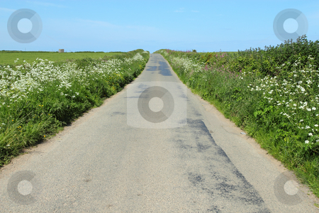 English country road wild flowers growing in the hedges. stock photo, English country road wild flowers growing in the hedges. by Stephen Rees