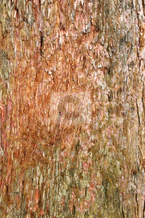 Rough colorful tree wood bark natural texture. stock photo, Rough colorful tree wood bark natural texture. by Stephen Rees