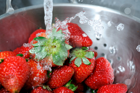 Rinsing Strawberries stock photo, Fresh clear water splashing off ripe red strawberries in a stainless steel colander with water drops caught suspended in the air. by Lynn Bendickson