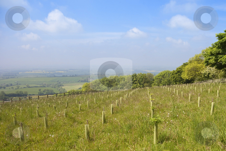 English landscape stock photo, View across the vale of york in england from a hillside with tree saplings hedgerows and patchwork fields under a blue sky in summer by Mike Smith