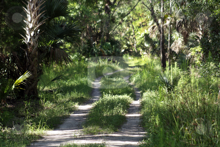 Dirt Road in a Tropical Forest stock photo, A dirt road disappears into a lush, tropical forest. by Carl Stewart