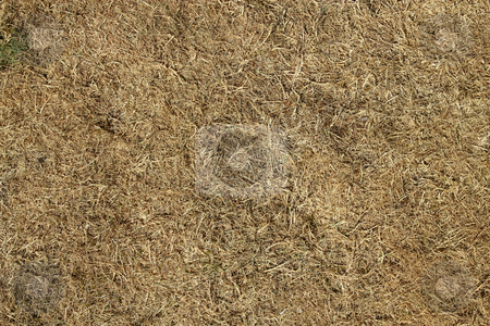 Dead grass burnt by the sun in a drought. stock photo, Dead grass burnt by the sun in a drought. by Stephen Rees