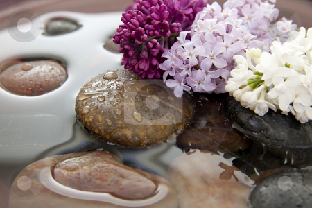 Rocks, flowers, and water stock photo, Rocks and lilac flowers in a bowl with water. Shallow DOF. Focus on purple lilacs. by Christy Thompson