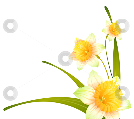 Flower stock photo, Drawing of beautiful narcissus flower with green branch by Su Li