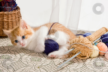 Playing with wool stock photo, Six weeks old kitten being naughty with knitting wool by Anneke