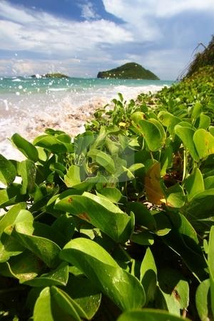 Anse de Sables Beach - Saint Lucia stock photo, Waves splash against the coast at Anse de Sables Beach in Saint Lucia. by Jason Ross