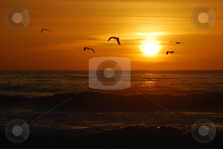 California sunset stock photo, Seagulls flying over the Pacific coast in California in sunset. by Ivan Paunovic