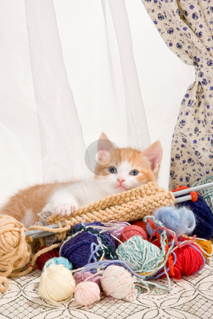 Knitting kitten stock photo, Six weeks old kitten being naughty with knitting wool by Anneke