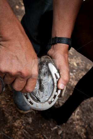 Close up of a man cleaning a horseshoe stock photo, Close up of a man cleaning a horseshoe with a small tool by Scott Griessel