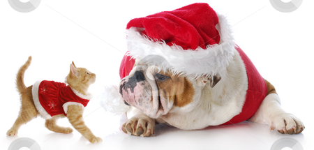 Christmas cat and dog stock photo, Adorable cat and dog dressed up for christmas with reflection on white background by John McAllister