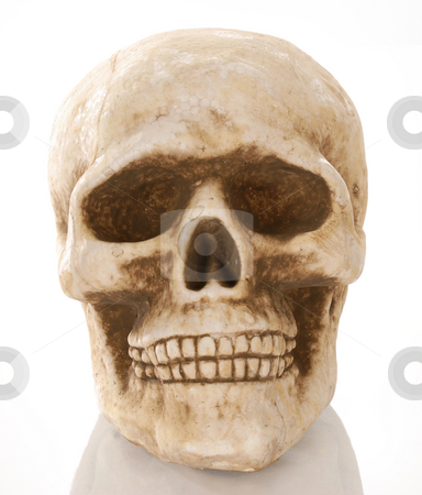 Skull stock photo, Skull skeleton with reflection isolated on white background by John McAllister
