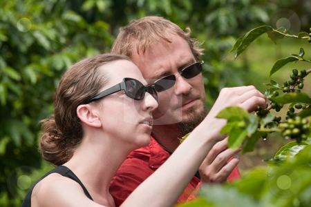 American and European couple on coffee plantation in Costa Rica stock photo, Attractive American and European couple on coffee plantation in Costa Rica by Scott Griessel