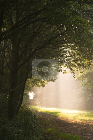 Falling light stock photo, Falling light through the trees on a misty Septembermorning by Colette Planken-Kooij